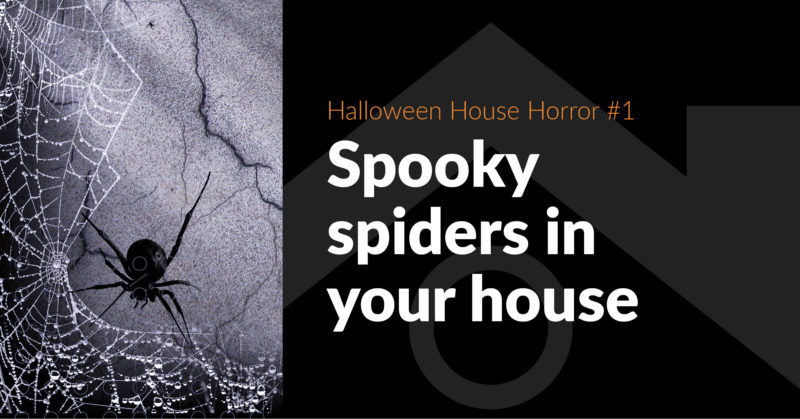House-Haunting Horror #1: Spooky Spiders - FB