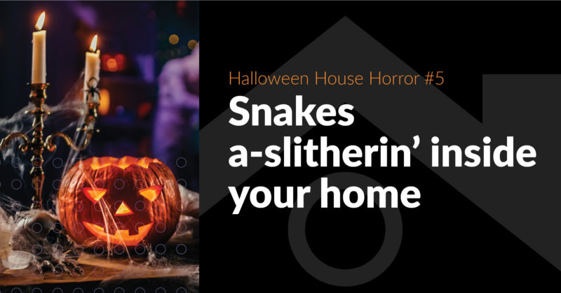 House-Haunting Horror #5: Slitherin' Snakes -  FB